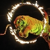 Цирки в Свердловске