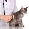Ветеринарные клиники в Свердловске